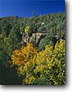 Stock photo. Caption: Arizona sycamore, Lanphier Canyon Trail Blue Range Primative Area Apache-Sitgreaves National Forest Arizona -- landscape landscapes united states america southwest southwestern rocky canyons erosion eroded rock formations autumn fall foliage pines formation sycamores wilderness wildernesses backcountry