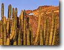 Stock photo. Caption: Organ pipe cactus and The Arch Arch Canyon,  Ajo Range Organ Pipe Cactus National Monument Sonoran Desert,  Arizona -- deserts monuments southwest southwestern united states america cactuses desert deserts arms arches spring landscape landscapes