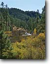 Stock photo. Caption: Willows and ponderosa pines Forest Highway 25, Black River White Mountains,  Apache-Sitgreaves National Forest,  Arizona -- fall autumn southwest southwestern united states america landscape landscapes contrast rivers tree trees pine willow riparian habitat habitats