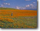 Stock photo. Caption: California poppies Antelope Valley   near Lancaster Los Angeles County,  California -- Keywords: united states america landscape landscapes solitude poppy field flowers flower wildflower wildflowers orange people person idyllic harmony  emotion soft sweet picturesque tourist destination destinations travel vacation Eschscholzia californica spring