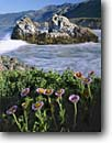 Stock photo. Caption: Seaside daisy Pacific Valley Los Padres National Forest Big Sur, California -- daisies forests santa lucia range ranges mountain seascape seascapes seastack seastacks headland headlands flowers flower wildflower wildflowers united states america wave waves surf scene scenic scenics erigeron glaucus spring