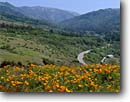 Stock photo. Caption: California poppies and Highway 1 Big Sur River Valley Andrew Molera State Park Monterey County,   California -- poppy flower flowers wildflower wildflowers spring verdant pastoral landscape landscapes united states america eschscholzia californica road roads mountain mountains one winding curve curves