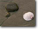 Stock photo. Caption: Eccentric sand dollar and barnacle Skunk Point,  Santa Rosa Island Channel Islands National Park California -- dollars islands parks beach beaches detail pacific coast shell shells united states america detail details closeup closeups sandy pacific barnacle barnacles atristic nature time solitude transitory dream shifting