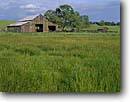 Stock photo. Caption: Ranch near Catheys Valley Mariposa County Sierra Nevada Foothills California -- oaks united states america ranches barns pasture pastures pastureland pasturelands barn pastoral ranch spring rural grasses americana