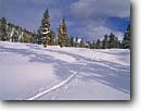 Stock photo. Caption: Ski tracks on the Malpais Golden Trout Wilderness Inyo National Forest Sierra Nevada,  California -- Keywords: united states america high mountain high country sierras backcountry people highcountry cross country skier skiing winter snow covered crosscountry outdoor recreation sunny track making wildernesses adventure pristine solitude forests trees sport sports