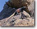 Stock photo. Caption: Chuckwalla lizards Joshua Tree National Park Mojave Desert California -- united states parks mohave america  portrait reptile reptiles animal animals colorful large lizard