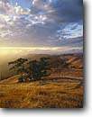 Stock photo. Caption: North Coast Ranges   from Bolinas Ridge Mount Tamalpais State Park Marin County,  California -- Keywords: united states america landscape landscapes coast coasts west pacific parks rolling hills oaks foggy clouds clouds summer weather san francisco bay area clouds cloudy golden light vista vistas view scenic views