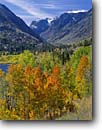 Stock photo. Caption: Aspens and Lundy Lake Toiyabe National Forest Sierra Nevada California -- Aspen fall autumn color colors   mountain mountains snow snowfall  crisp united states america peaks capped lakes highcountry landscape landscapes eastern