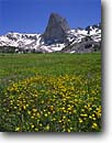 Stock photo. Caption: Buttercups below Flatiron Butte Hoover Wilderness Toiyabe National Forest Sierra Nevada, California -- united states america flower flowers wildflower wildflowers high mountain wildernesses high country yellow meadow meadows forests sierras