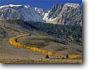 Stock photo. Caption: Aspens line Laurel Creek   and the Mammoth Crest Inyo National Forest Sierra Nevada,  California -- snow fresh cold tree trees peak peaks mountain mountains landscape landscapes united states america curve curves aspen sierras autumn fall color eastern