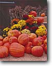 Stock photo. Caption: Autumn display June Lake Loop Mono County California -- united states america sierras pumpkins pumpkin seasonal season halloween squash decoration decorations flowers flower orange