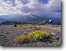 Stock photo. Caption: Mountain biking along San Joaquin Ridge   near Mammoth Mountain Inyo National Forest Sierra Nevada, California -- Keywords: united states people outdoor recreation biker bicycle bicycles trail trails bike transportation cross country crosscountry freedom solitude excitement trail trails flower flowers wildflower wildflowers field spring  bikes sport sports landscapes landscape