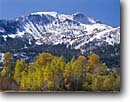 Stock photo. Caption: Aspens and Mammoth Mountain Inyo National Forest Eastern Sierra Nevada Mono County,  California -- Keywords: united states america fall autumn highcountry backcountry sierras landscape landscapes landmark landmarks peaks mountain mountains granite ridges ridge prominent clear sunny blue skies foliage color colors colours colour trees tree snow capped peaks peak