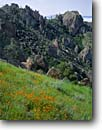 Stock photo. Caption: Collarless California poppy High Peaks Trail Pinnacles National Monument San Benito County,  California -- united states america monuments gabilan range south coast ranges spring Eschscholzia caespitosa landscape landscapes rugged poppies jagged tourist destination destinations family vacation mountain mountains