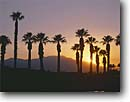 Stock photo. Caption: Palms at sunset   and Little San Bernardino Mountains Coachella Valley near Palm Desert Mojave Desert,  California -- united states america landscape landscapes solitude sunsets palm tree trees silhouette silhouettes mohave deserts oasis tropical southern