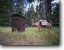 Stock photo. Caption: Pack mule waits at outhouse Blayney Meadows Sierra National Forest Sierra Nevada, California -- united states america outhouses toilet toilets latrine mountains sierras cute symbol western rest room john privy head rustic mules patience livestock summer