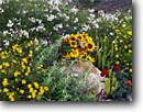Stock photo. Caption: Private garden Central Coast San Luis Obispo County California -- united states america landscape landscapes flowers soft sweet floral gardens cottage gaillardia plantings informal