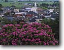 Stock photo. Caption: Rhododendron and town of Ferndale Eel River Valley Humboldt County California -- gardens flowers flower summer manicured landscaping gardening united states america historic historical north coast northcoast coastal towns steeple steeples pastoral rural building buildings towns