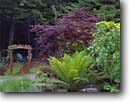 Stock photo. Caption: Private Garden Trinidad Humboldt County California -- gardens formal flowers walkway path paths pathway pathways flower summer walkways manicured landscaping gardening trail trails arbor arbors leisure patio patios tree fern ferns maples chair chairs trellis trellises