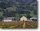 Stock photo. Caption: Regusci Vineyards Silverado Trail Napa Valley Wine District Napa County,  California -- wine country spring rural crops grape grapes agriculture vine countryside  farming farm united states america rural pastoral bountiful getaway tourist destination destinations landscape landscapes rows vines cloudy winery vineyard building buildings