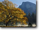 Stock photo. Caption: Half Dome  from Yosemite Valley Yosemite National Park Sierra Nevada,  California -- fall autumn tree trees color colors granite domes glaciated glacial valleys parks world heritage site sites united states america landscape landscapes pristine travel tourist attraction attractions spiritual misty