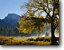 Stock photo. Caption: Half Dome   from Yosemite Valley Yosemite National Park Sierra Nevada,  California -- fall autumn tree trees color colors granite domes glaciated glacial carved valleys parks world heritage site sites united states america landscape landscapes pristine tourist attraction attractions destination sierras mountain mountains