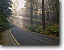 Stock photo. Caption: Sunrays through pine trees Yosemite Valley Yosemite National Park Sierra Nevada,  California -- united states america sierras  world heritage site sites roads road roadway parks ethereal spiritual