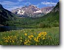 Stock photo. Caption: Little sunflower Maroon Lake & Maroon Bells White River National Forest Rocky Mountains, Colorado -- sunflowers flower flowers wildflower wildflowers summer peak peaks fourteener fourteeners lakes   landscape landscapes united states america aspen aspens helianthella quinquenervis lakes meadow meadows rockies  mountain