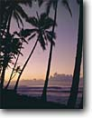 Stock photo. Caption: Coconut palms at sunrise Kaimu Black Sands Beach Island of Hawaii Hawaii -- palm tropical tourist destination destinations united states winter islands tourist travel seascape seascapes attraction attractions volcanic romantic honeymoon getaways leisure solitude peace peaceful pristine hawaiian sunrises moon moons with calm