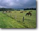 Stock photo. Caption: Kula Upcountry Island of Maui Hawaii -- landscape landscapes scenic scenics scene warm tropics tropical horses horse livestock pasture pastures grazing graze ranch ranches ranchland pastoral green hawaiian vacation vacations destination destinations animals animal landscape landscapes coasts co