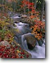 Stock photo. Caption: Sugar maple Jordan Stream Acadia National Park Mount Desert Island,  Maine -- Keywords: united states america parks fall northeastern autumn new england leaves color colors colour colours hardwood forest northern rivers Acer saccharum creek creeks streams cascading tumbling rush rushing  pure purity