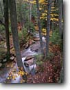 Stock photo. Caption: Jordan Stream Acadia National Park Mount Desert Island Maine -- Keywords: united states america parks fall northeastern autumn new england leaves color colors colour colours hardwood forest northern rivers Acer saccharum creek creeks streams cascading tumbling rush rushing pure purity