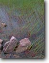 Stock photo. Caption: Aquatic rushes Eagle Lake Acadia National Park Mount Desert Island,  Maine -- Keywords: united states america parks summer rush water new england pond green color colorful marsh marshy ponds lakes grasses verdent artistic nature wetland wetlands grasses verdent