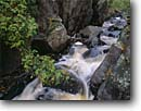 Stock photo. Caption: White cedar,  Miller Creek Lincoln Park Duluth St. Louis County,  Minnesota -- Keywords: united states america  midwest midwestern upper north woods parks  city creeks waterfall waterfalls falls rock water flowing torrent torrents cascades city wild