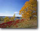 Stock photo. Caption: Sumac and maples Maplewood State Park Otter Tail County Minnesota -- united states america landscape landscapes mountains autumn fall color colour colors colours parks