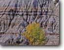 Stock photo. Caption: Green ash and badland Scenic Loop Drive,  South Unit Theodore Roosevelt National Park North Dakota -- united states america parks badlands erosion eroded parks geology geologic tree trees ashes