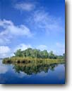 Stock photo. Caption: Horseshoe Creek Ashepoo River ACE Basin Colleton County, South Carolina -- Keywords: united deep south southern states river rivers lowcountry swamp swamps swampy pristine estuarine estuary estuaries unspoiled ecosystem ecosystems bottomland bottomlands riparian wetlands lowland lowlands wetland habitat landscape spring sunny landscapes