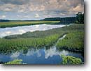 Stock photo. Caption: Mosquito Creek along Fenwick Island    off the Ashepoo River ACE Basin Colleton County, South Carolina -- united deep south southern states america river rivers lowcountry swamp swamps swampy pristine estuarine estuary estuaries unspoiled ecosystem ecosystems bottomland bottomlands riparian wetlands lowland lowlands wetland habitat landscape spring landscapes