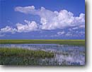 Stock photo. Caption: Salt marsh at high tide Saint Helena Sound ACE Basin Colleton County,  South Carolina -- united deep south southern states america river rivers lowcountry swamp swamps swampy pristine estuarine estuary estuaries unspoiled ecosystem ecosystems bottomland bottomlands riparian wetlands lowland lowlands