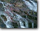 Stock photo. Caption: Redbud at Station Cove Falls Blue Ridge Escarpment Oconee County South Carolina -- united appalachian mountains south southeast southern southeastern states america appalachia forests water flowing serene waterfalls waterfall cascades cascading creek creeks fall spring pure purity water forests Cercis canadensis small shrub native tree