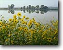 Stock photo. Caption: Tickseed and Ashley River Middleton Plantation Dorchester County South Carolina -- united deep south southern states america creeks river rivers lowcountry swampy swamp swamps pristine estuarine estuary estuaries unspoiled ecosystem ecosystems spring summer lowland lowlands lance-leaved Coreopsis lanceolata invasive