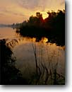 Stock photo. Caption: Dawn on the Ashley River   with southern wild rice Middleton Plantation Dorchester County,  South Carolina -- united deep south southern states america creeks river rivers lowcountry swampy pristine estuarine estuary estuaries unspoiled ecosystem ecosystems sunrises tidal sunrise