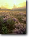 Stock photo. Caption: Sunrise over field of sweet grass along the Stono River Dill Reserve South Carolina -- misty sunrise sunrises foggy sunburst sunbursts tree trees grasses marsh deep south southern states america charleston county dawn marshes landscape landscapes dewy damp mist wetland wetlands marshes marsh habitat artistic nature scenic scenics ethereal