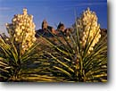 Stock photo. Caption: Spanish-dagger and Mule Ears Peaks Chisos Mountains Big Bend National Park Chihuahuan Desert,  Texas -- yuccas parks deserts spring united states america flowers wildflower wildflowers lily family torreyi landscape landscapes arid dry companionship soutwestern southwest american bloom blooms blooming blossom blossoms