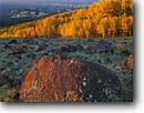 Stock photo. Caption: Lava boulder and aspens Boulder Mountain Escalante River Basin Dixie National Forest Colorado Plateau, Utah -- boulders aspen mountains basins forests plateaus tree trees canyon country fall autumn colors color united states america landscape landscapes basalt erratic erratics soft light sunrise