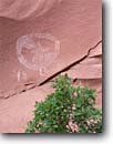 Stock photo. Caption: Star Man and gambel oak Chinle Wash Navajo Indian Reservation Colorado Plateau,  Utah -- united states america rock art anasazi native american ancient archeological site sites culture cultural communication stars petroglyphs pictograph pictographs mysterious mystery prehistory prehistoric