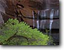 Stock photo. Caption: Fremont cottonwood and waterfall Gateway to the Narrows,  Zion Canyon Zion National Park Colorado Plateau,  Utah -- united states america narrow red country desert deserts spring parks rock rocks canyons erosion waterfall waterfalls cottonwood deciduous sandstone ephemeral tree trees