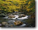 Stock photo. Caption: White River and American Beech Green Mountain National  Forest Vermont New England -- forest forests creek creeks stream streams fall autumn northeast northeastern states united hardwood northern america colors foliage color yellow rapid rapids purity pure peaceful tranquil rivers beeches rushing water waters