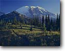 Stock photo. Caption: Mount Rainier   from Grand Park Mount Rainier National Park Cascade Range,  Washington -- united states america parks peaks subalpine mountains summer pacific northwest northwestern landscape landscapes volcano volcanoes glacier glaciers backcountry wilderness wildernesses cascades trail hiking trails meadow meadows