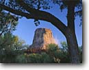 Stock photo. Caption: Fremont cottonwoods   and Devils Tower Devils Tower National Monument Wyoming -- columnar basalt tree trees peak peaks volcanic plug plugs extinct volcano volcanoes plains america monuments landscape landscapes tourist travel attraction attractions destination destinations cottonwood spring climbing sunny clear cosmic
